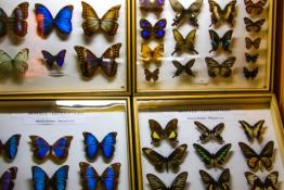 Władysławowo Atrakcja Muzeum Muzeum Motyli