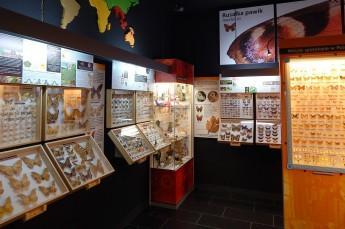 Władysławowo Atrakcja Muzeum Motyle Świata